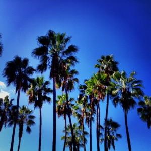 Need a Tour Company in Los Angeles and Beverly Hills?