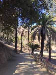 Runyon Canyon Hiking Trail