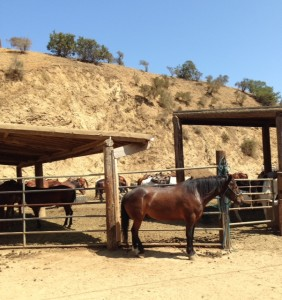 Los Angeles and Hollywood Horseback Riding