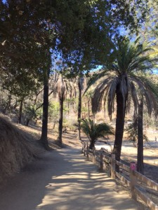 Runyon Canyon Hiking Trail