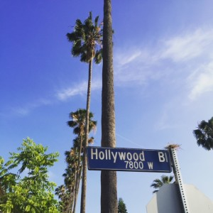 Explore the Diverse Communities Around Hollywood