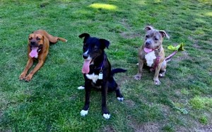 Los Angeles Dog Parks Include Runyon Canyon