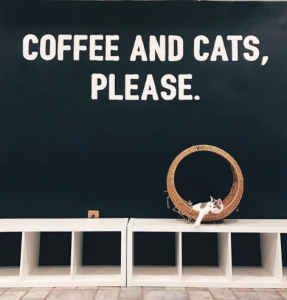 Coffee and Cats in Los Angeles
