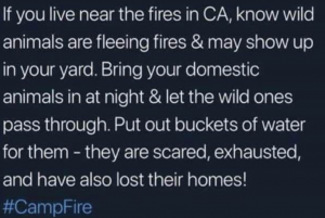 Helping Animals in Fires