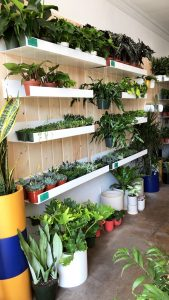 Plant shop in Los Angeles