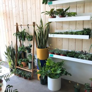 The Sill for Plants in Los Angeles
